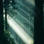 鎮守の森イメージ3