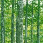 鎮守の森イメージ1